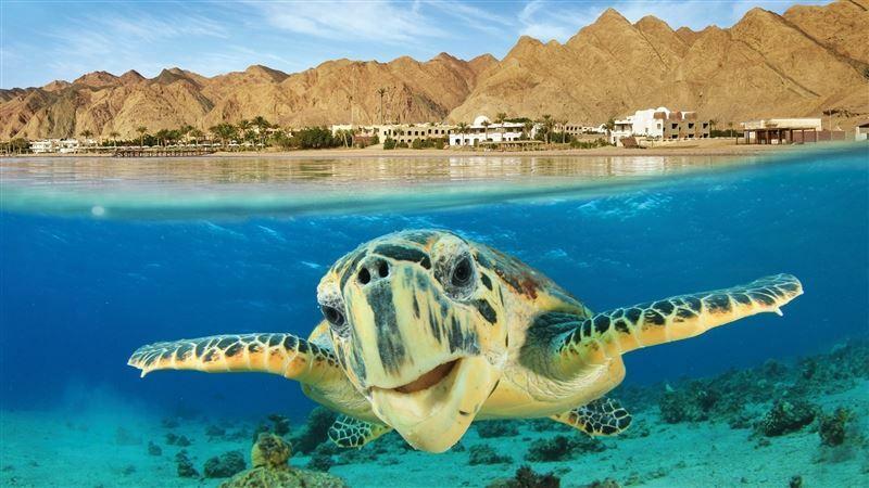Фото Tez Express 4* Aqua Park Beach Resort Hrg 4 * 4*