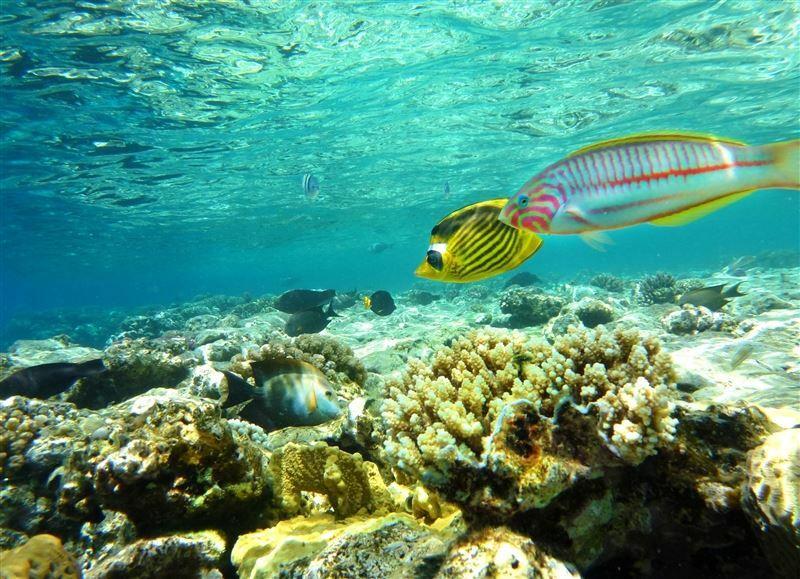 Фото Tez Express 5* Aqua Park Resort Hrg 5*