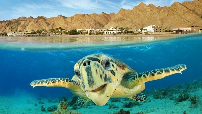 Roulette 4* Aquapark Hurghada Египет Хургада