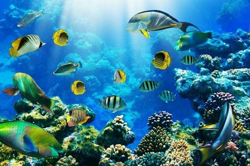 Отель Roulette 4* Aquapark Hurghada Хургада