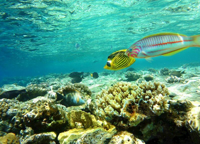 Отель Roulette 4* Aquapark Hurghada Египет Хургада
