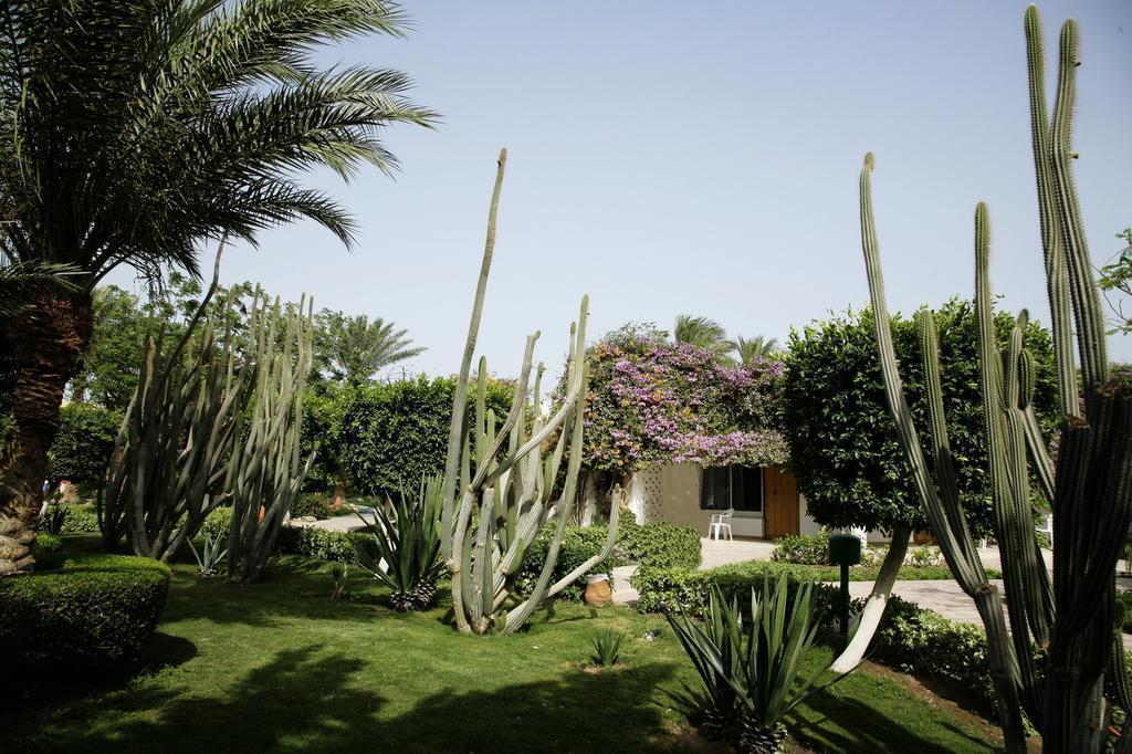 Фото Shams Safaga Resort Сафага