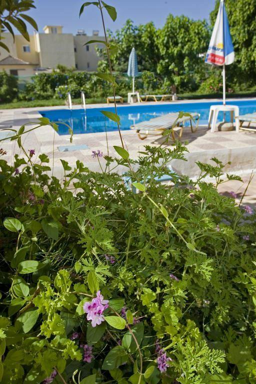 Фото Domenica Apartments