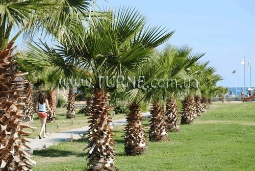 Отель Delfina On The Beach Ретимно (о. Крит)