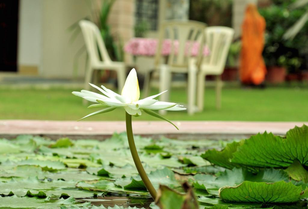 Фото Jai Niwas 3*