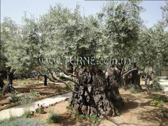 Mount Of Olives 3*, Израиль, Иерусалим