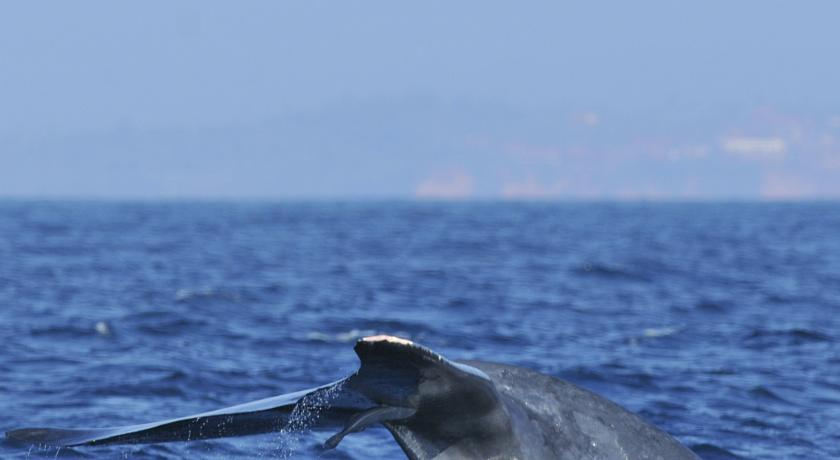 Ocean Reach Holidays Шри-Ланка Матара