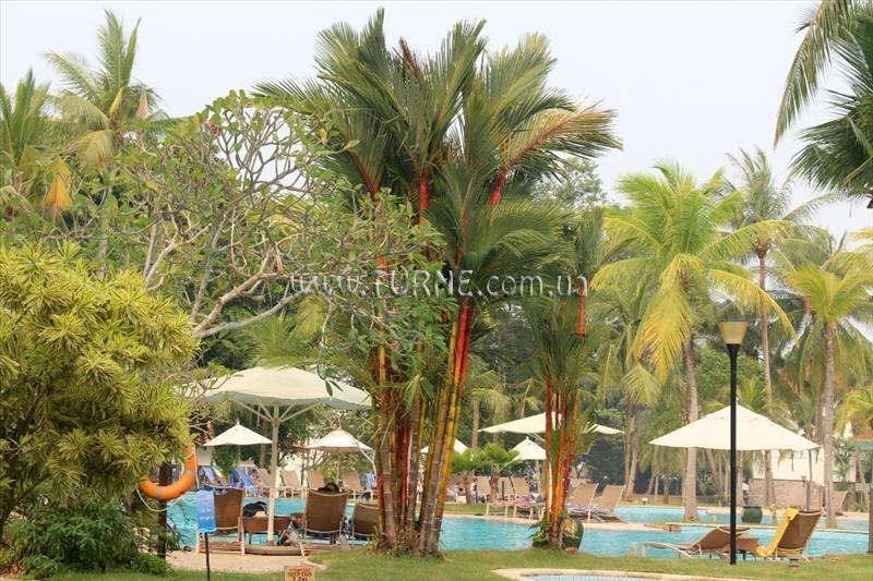 Фото Bintan Lagoon Resort 5*