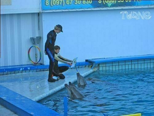 Фоторепортаж: Крымский дуэт - Воронцовский дворец и дельфинарий