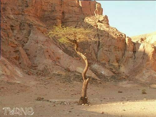 Фоторепортаж: Чудо природы – Цветной каньон